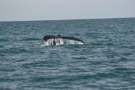 На память туристы увозят с собой фотографии морских гигантов