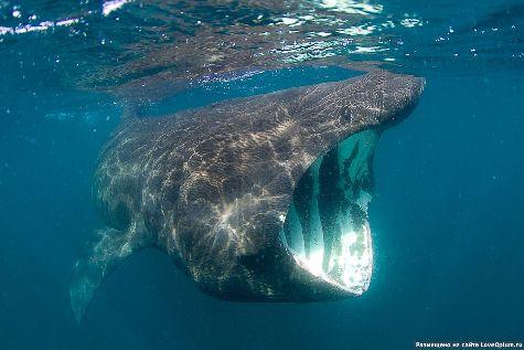 Существует ли опасность встретиться в Доминикане с акулой нос к носу? Давайте узнаем!