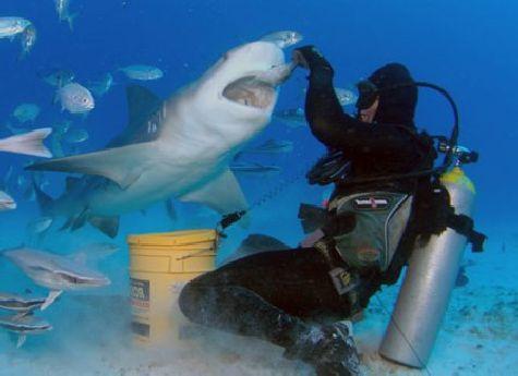 Никогда не подкармливайте акулу, это разжигает в ней аппетит!