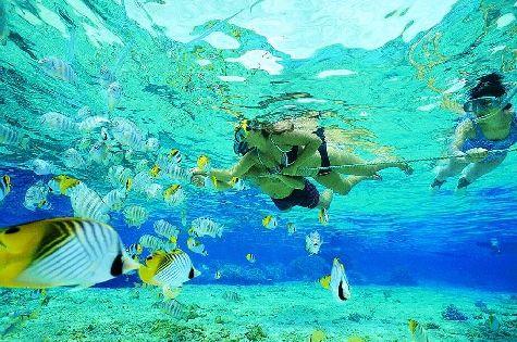 Дайвинг и сноркелинг особенно популярны среди молодежи на живописных и богатых морской живностью пляжах Байяибе и острова Саона