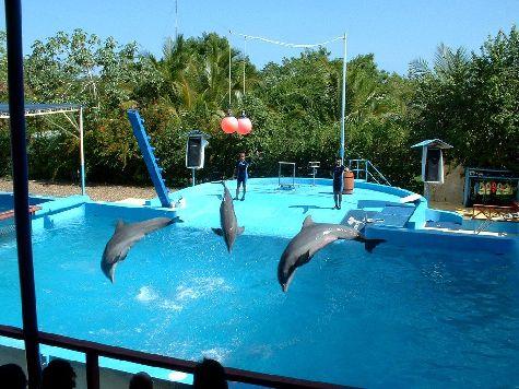 Парк Манати предоставляет массу интересных природных развлечений - как насчет поплавать с дельфинами?