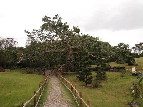 Приятное место для прогулок - Ботанический сад Санто-Доминго